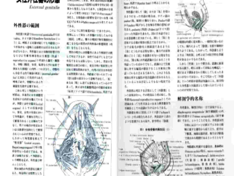 日本女性の外性器① 0 | 0  100pic 25