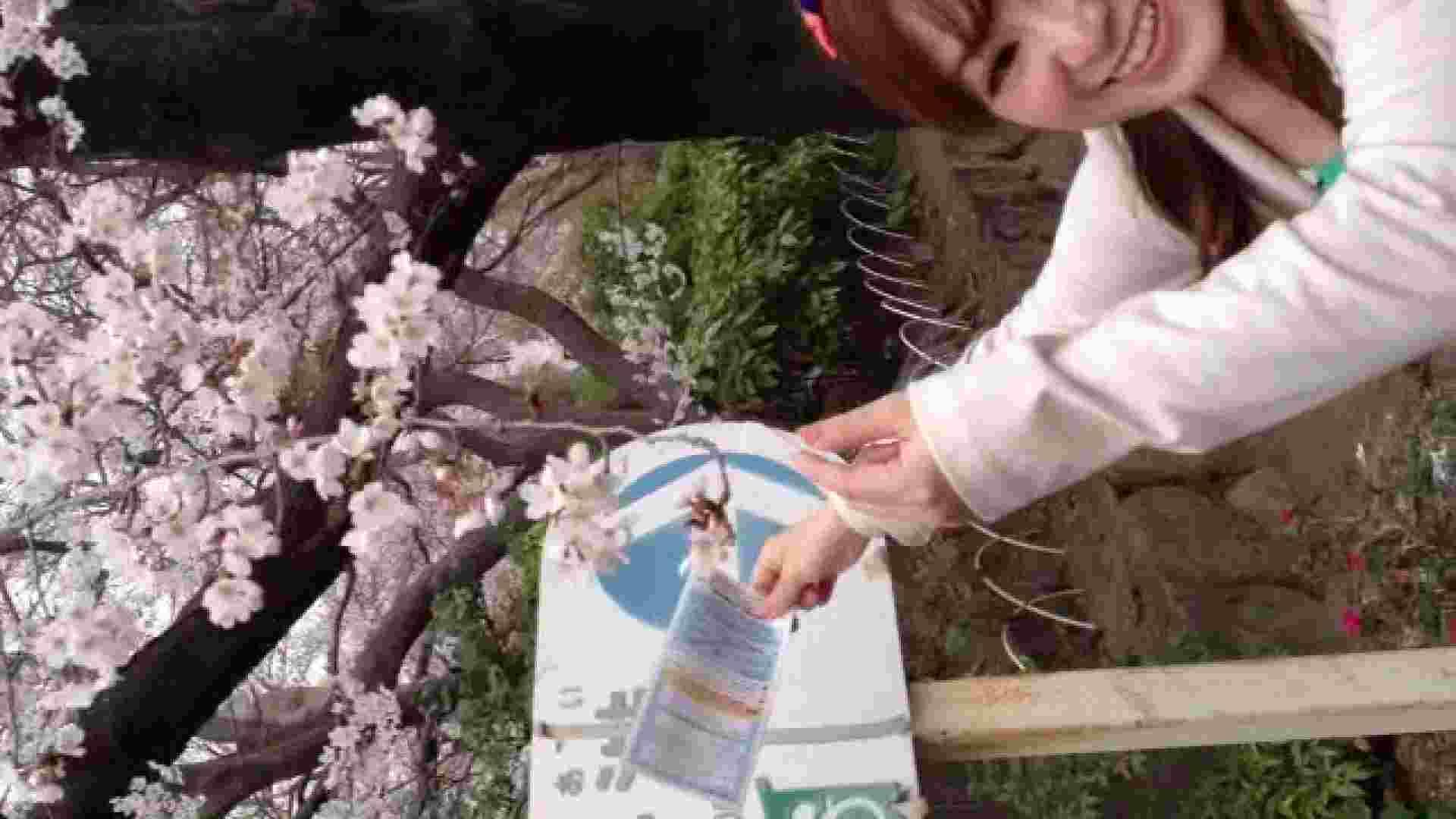 23(19日目)桜を見ながらお散歩 おまんこ無修正 ワレメ動画紹介 83pic 9