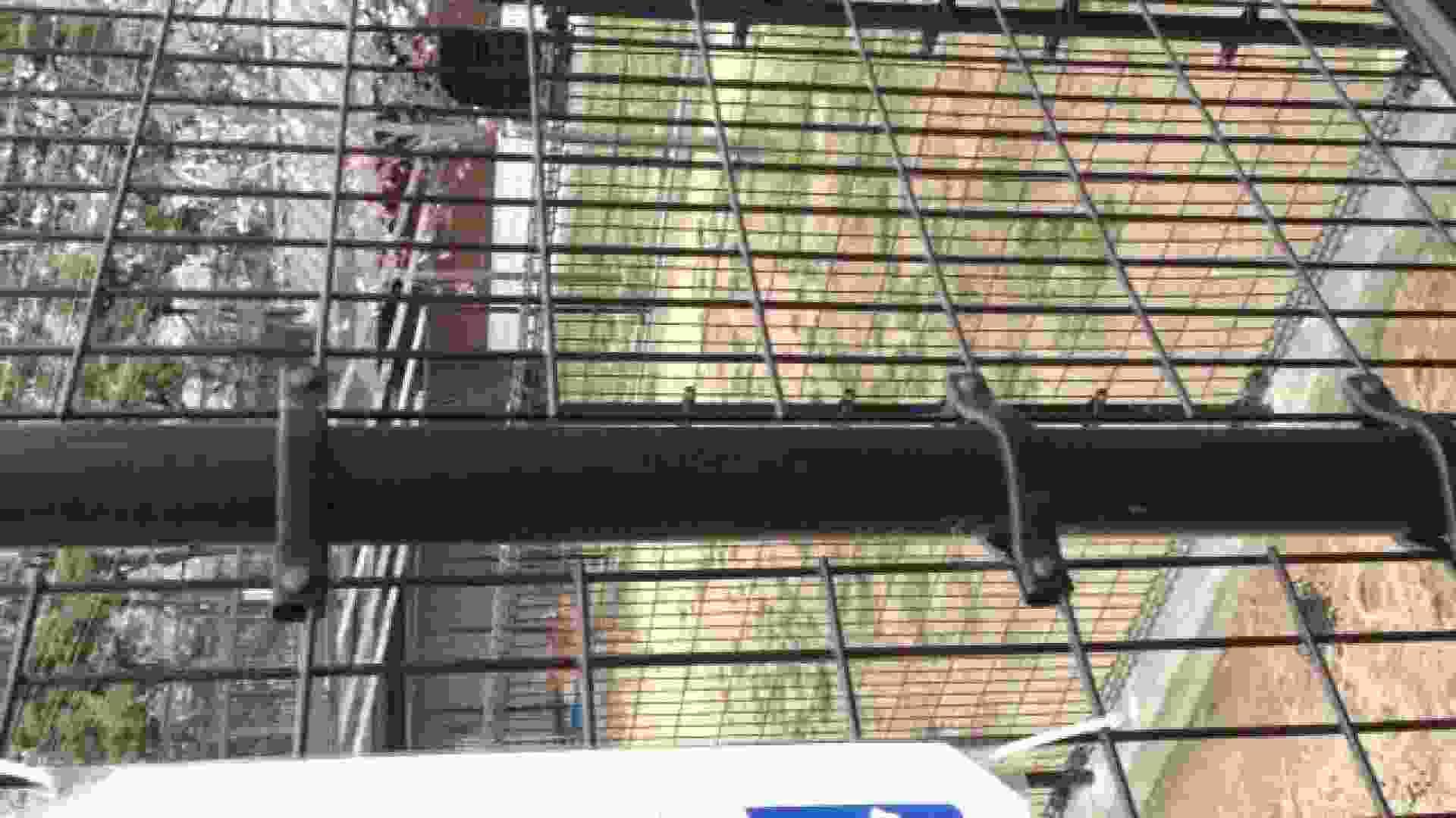 23(19日目)桜を見ながらお散歩 覗き | ギャル  83pic 26