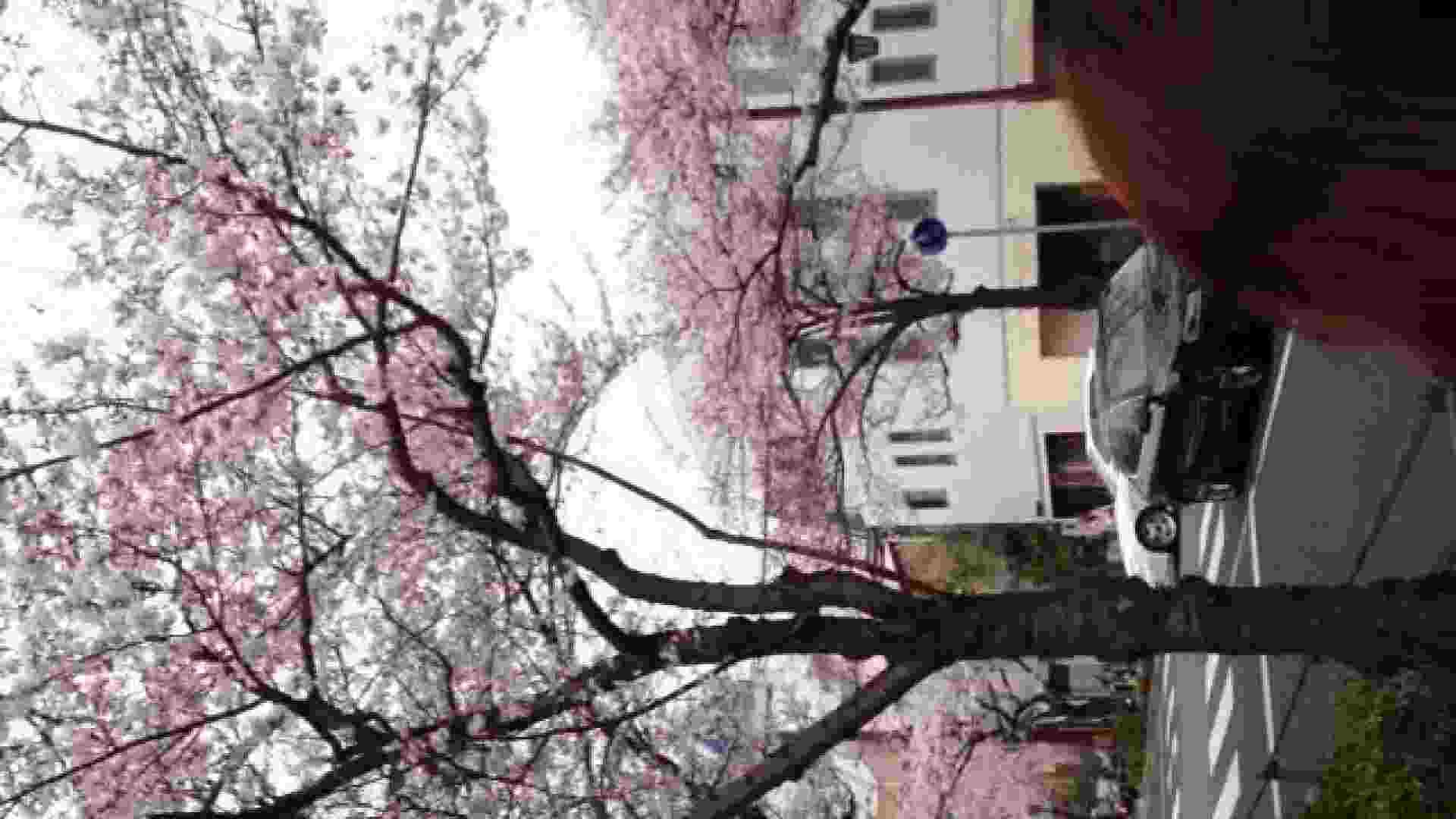 23(19日目)桜を見ながらお散歩 覗き | ギャル  83pic 46